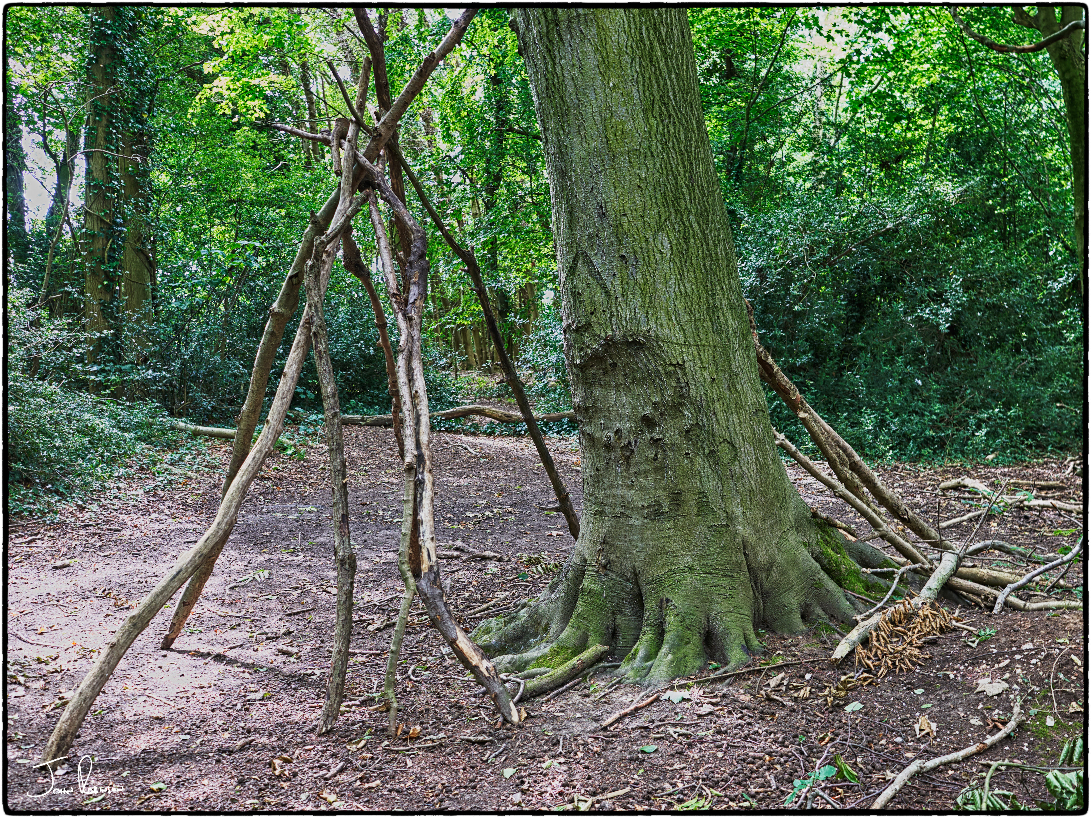 Rudimentary shelter in Freedown Wood, Kent