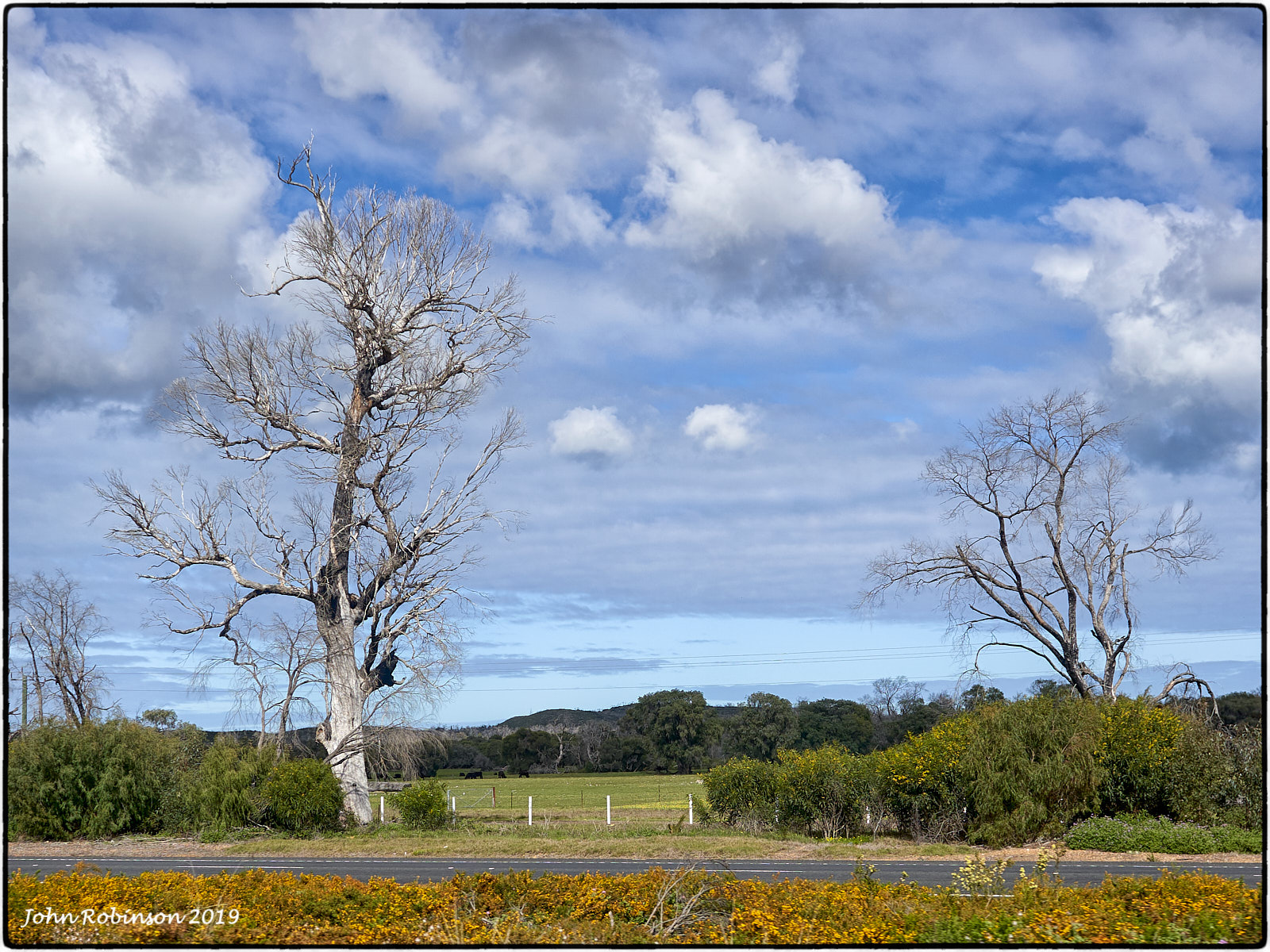 Death by the roadside in South Western Australia