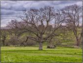 Northbourne Farm
