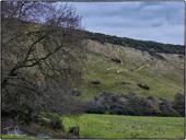 White Horse, Folkestone Downs